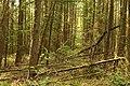 Obersteinbeck Naturschutzgebiet Am Kaelberberg 04.JPG