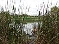 Oczko wodne na Natoline - panoramio.jpg