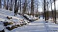 Ogród Botaniczny w Myślęcinku, Bydgoszcz, Polska - panoramio (37).jpg