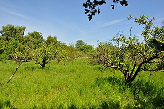 Aldeby - Old Apple Orchard, Three Gates Farm