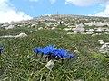 Omaggio alla vetta - panoramio.jpg