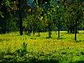 Orchard - panoramio (3).jpg