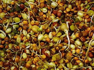 Mixed organic bean sprouts