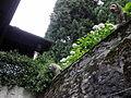 Orta Isola San Giulio 22.JPG