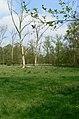 Oud-Turnhout Schuurhovenberg 31 Landschapspark - 208933 - onroerenderfgoed.jpg