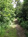 Overgrown road - geograph.org.uk - 856886.jpg