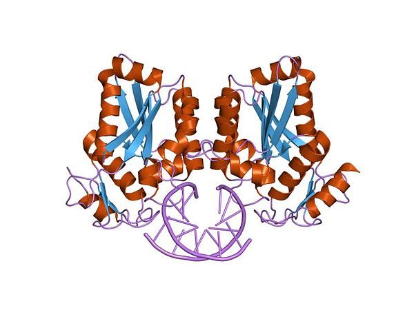 list of restriction enzymes pdf