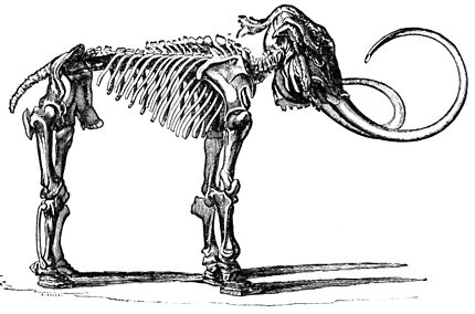 PSM V21 D509 Skeleton of a mammoth.jpg