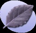 P Leaf.png