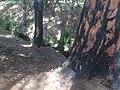 Parc du Griffon traces incendie vitrolles.jpg