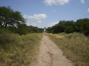 Semi-arid Pampas - Path in La Pampa Province, lined with caldén.