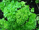 Parsley.jpg