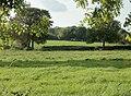 Pasture near Three Tuns Farm - geograph.org.uk - 1547582.jpg