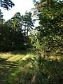 Path on Buller's Hill, Haldon - geograph.org.uk - 239560.jpg