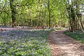 Path through Calveslease Copse, Roydon Woods, New Forest - geograph.org.uk - 408513.jpg