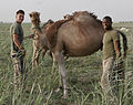 Patrolling through Helmand province DVIDS104287.jpg
