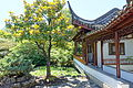 Pavilion with tree - Dr. Sun Yat-Sen Classical Chinese Garden - Vancouver, Canada - DSC09867.JPG