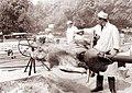 Pečenje vola v Tivoliju ob 20-letnici vstaje slovenskega ljudstva 1961.jpg