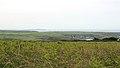 Penrhos Feilw, Holy Island (507286) (32294735664).jpg