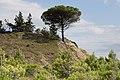 Peyriac-de-Mer-1078 - Flickr - Ragnhild & Neil Crawford.jpg