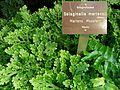 Pflanzen in den Gewächshäusern (12).jpg