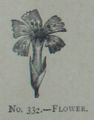 Picture Natural History - No 332 - Flower.png
