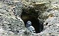 Pigeon in Hostibejk.jpg