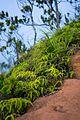 Pihea trail (32785117165).jpg