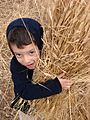 PikiWiki Israel 38214 Agriculture in Israel.JPG