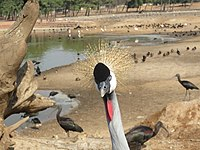 PikiWiki Israel 53076 wildlife animals.jpg