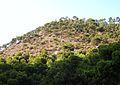Pineda del Benacantil, Alacant.JPG