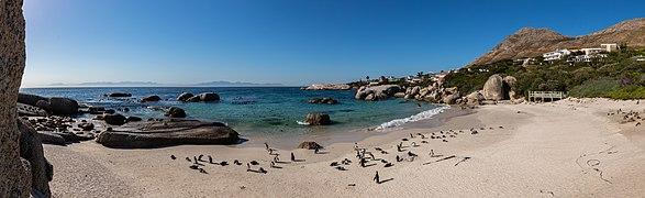 Pingüinos de El Cabo (Spheniscus demersus), Playa de Boulders, Simon's Town, Sudáfrica, 2018-07-23 PAN 35-38.jpg