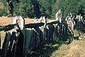 Pioneer Fence - Flickr - Dick Culbert.jpg