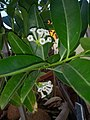 Plants at Bijalinagar 26.jpg