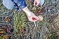 Pleurotus-eryngii-seta-de-cardo-sandoval-de-la-reina-2020.jpg