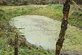 Pond, Babliniec.JPG