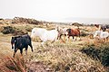 Pony herd in the autumn (Unsplash).jpg