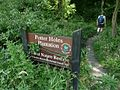 Potter Holes Plantation - geograph.org.uk - 898328.jpg