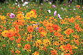 Prairie Compans orange.jpg