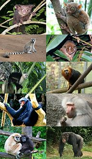 Primates - some families.jpg