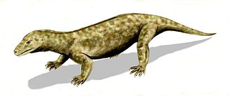 Evolution of mammals - Restoration of Procynosuchus, a member of the cynodont group, which includes the ancestors of mammals
