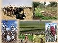 Productions agricoles du Burkina Faso.jpg