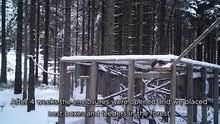 Arquivo: Protegendo o icônico esquilo vermelho em Clocaenog forest.webm