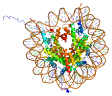 Protein HIST1H2AA PDB 1aoi.png