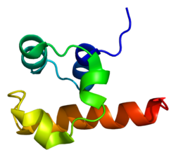 Protein TP73L PDB 1rg6.png