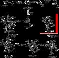 Protoporphyrin IX Biosynthetic pathway.png
