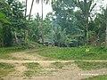 Purok 5, Damulog, Bukidnon - panoramio.jpg