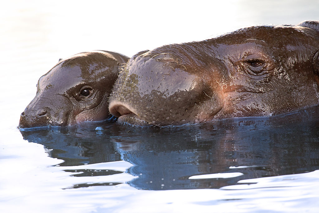 Mother and child having a bath