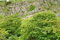 Quarry in Twistleton Glen (7554).jpg