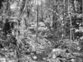 Queensland State Archives 410 Morans Creek Lamington National Park Beaudesert Shire September 1933.png